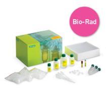 Bio-Rad Enzyme Kit  Buy Now £179.14