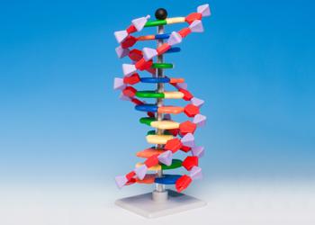 DNA & RNA